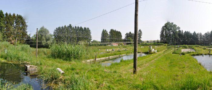 Die Teichanlage von Fischzucht Berger